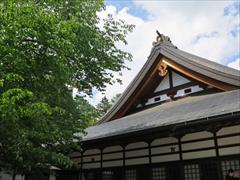 本殿左側の山桜の新緑