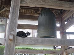 神宮寺境内の鐘、猫
