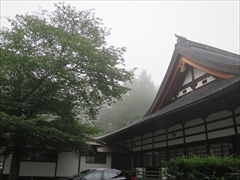 本殿左側の山桜