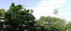 軽井沢 神宮寺 新緑
