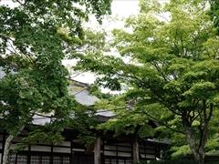 神宮寺本殿 深緑