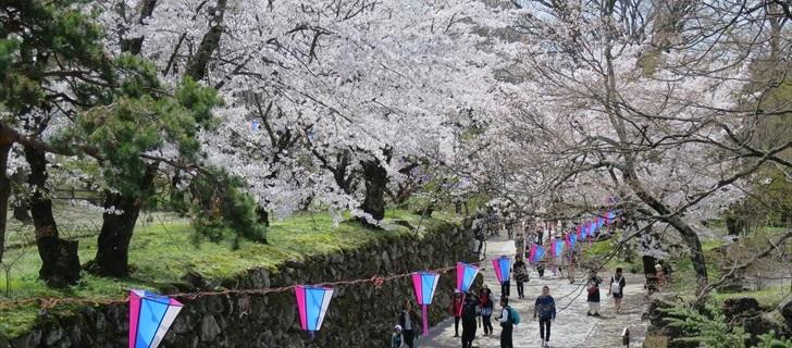 小諸城址 二の丸跡付近の桜