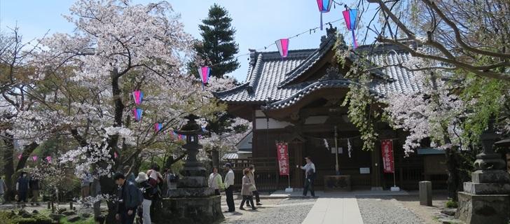 小諸城址 懐古神社の桜が満開