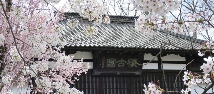 小諸城址 桜 軽井沢