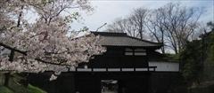 軽井沢 小諸城址 懐古園 桜