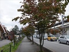 軽井沢 軽井沢駅ヤマボウシ並木