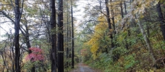 軽井沢 軽井沢野鳥の森 10月29日