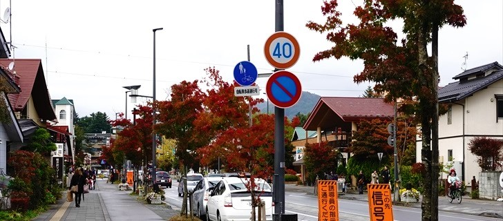 軽井沢本通り街路樹