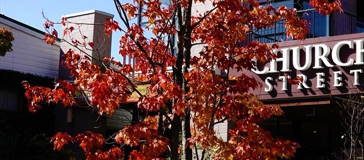 旧軽井沢銀座通り