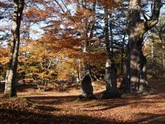 諏訪神社 2018.10.28