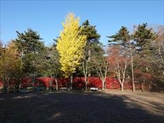 諏訪の森公園 2018.10.28