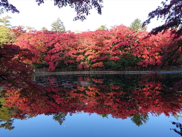 軽井沢 雲場池 池に映る紅葉が見事です 2018年10月28日