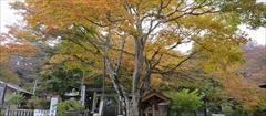 軽井沢 熊野皇大神社 紅葉