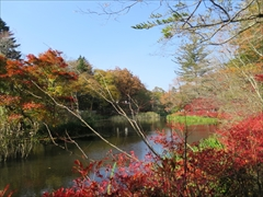 雲場池 紅葉