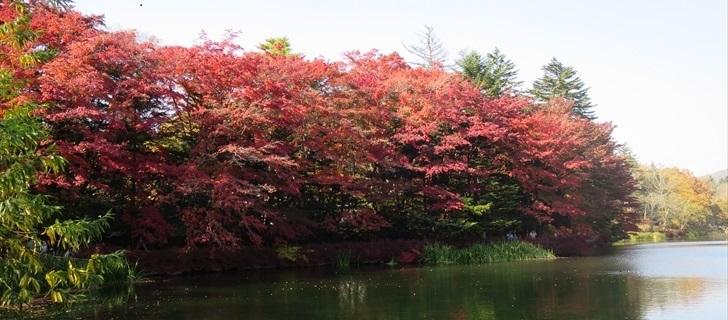 雲場池の紅葉が見頃になっています