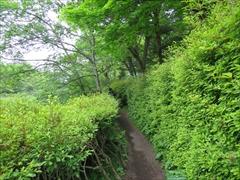 雲場池 遊歩道 新緑