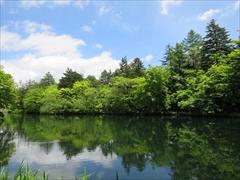 雲場池正面から右側