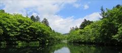 軽井沢 雲場池 若葉