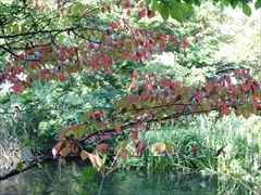 軽井沢 雲場池 雲場池 紅葉