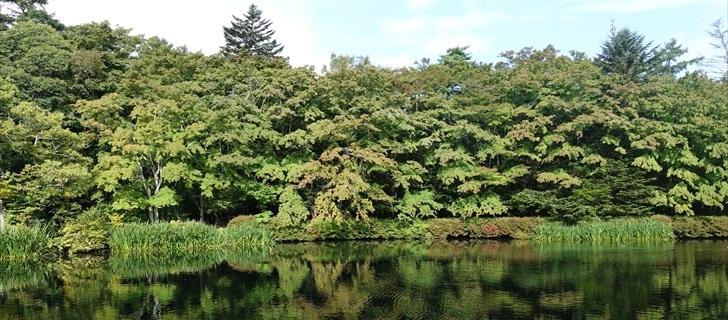 軽井沢 雲場池 モミジが色付き始めた雲場池