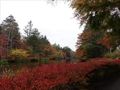 軽井沢 雲場池 紅葉 最盛期