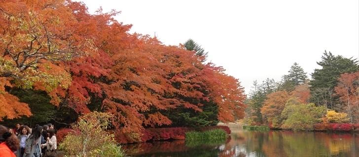 軽井沢 雲場池 軽井沢 雲場池の紅葉が最盛期になりました