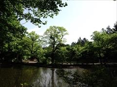 軽井沢 雲場池入口付近から