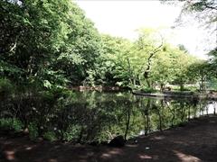 軽井沢 雲場池 入口付近の池