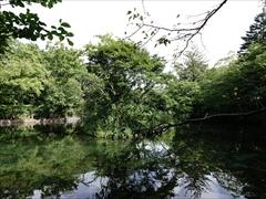 軽井沢 雲場池 水鳥の島
