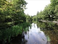 軽井沢 雲場池 橋から水鳥の島方向