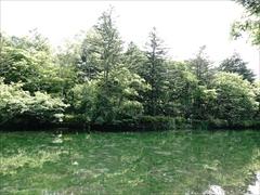 軽井沢 雲場池 遊歩道から対岸