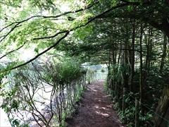 軽井沢 雲場池 遊歩道