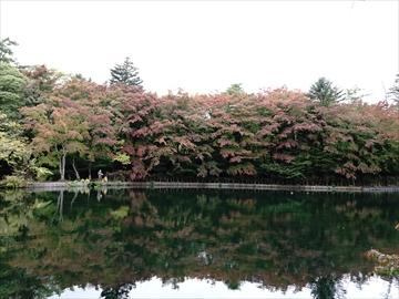 軽井沢 雲場池 雲場池 紅葉の始まり