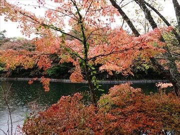 軽井沢 雲場池 雲場池 見頃の紅葉