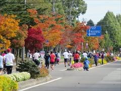 マラソン国道18号 紅葉