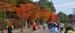 軽井沢 街路樹 紅葉