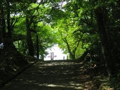 見晴台 若葉 新緑 軽井沢
