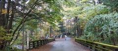 軽井沢 二手橋 紅葉