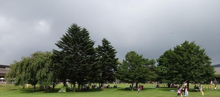 夏になりアウトレットの木々は春から比べ緑が深くなりました