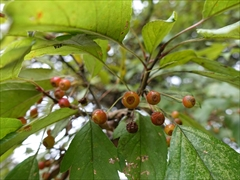 軽井沢 アウトレット 木の実