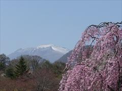 軽井沢 アウトレット ニューウエスト桜から浅間山