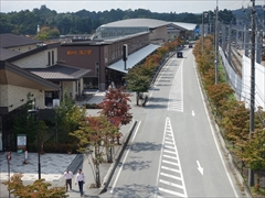 軽井沢駅南口側の街路樹