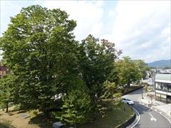 軽井沢駅北口の木々