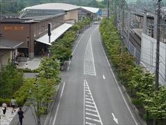 軽井沢 軽井沢駅南口側の街路樹