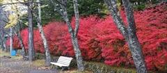 軽井沢 諏訪の森公園 紅葉