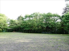 諏訪の森公園 新緑
