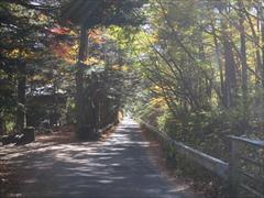 軽井沢 別荘内の紅葉