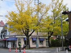 国道133号 紅葉 軽井沢