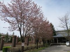 東急ハーベスト 山桜