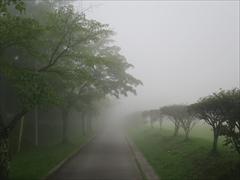 16:24 大賀ホール桜並木